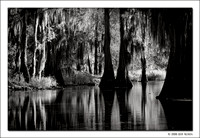 Cypress Trees and Reflections, Caddo Lake, 2008